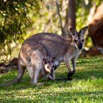 Écotourisme en Australie: quels sont les points essentiels à savoir pour un séjour réussi?